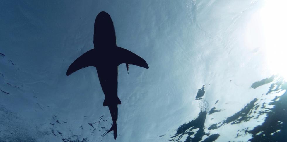 Dwa rekiny zostały zauważone w wodach Keem Bay na wyspie Achill w Irlandii